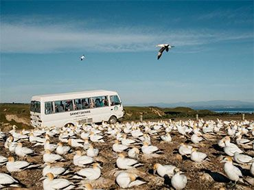 Gannet Safaris