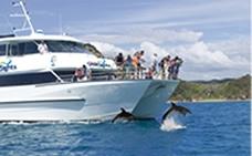 Cape Reinga tours