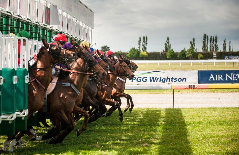 Interislander horse races