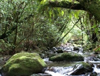 pirongia-forest