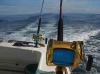 Image of Whakatane fishing charters