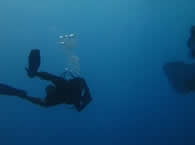 Image of Scuba diving in Whakatane