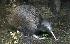 The National Kiwi Centre