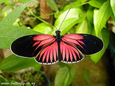 Butterfly and Orchid Garden