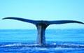 Whale Watch Wayside Motel