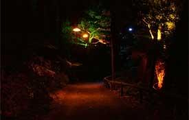 Taranaki Festival of Lights