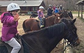 Hanmer Horse Treks