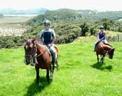 Horse Treks Image