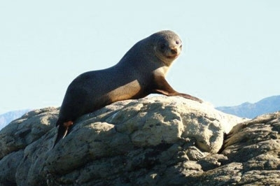 seal and dolphin watching kaikoura