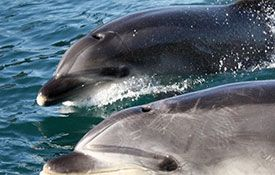 Explore: Dolphin Discovery