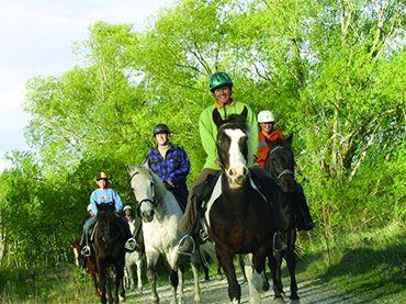 Waimak River Horse Treks