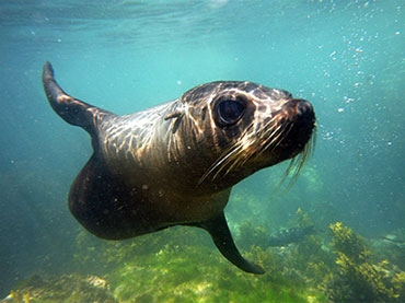 Kaikoura Seal Swim