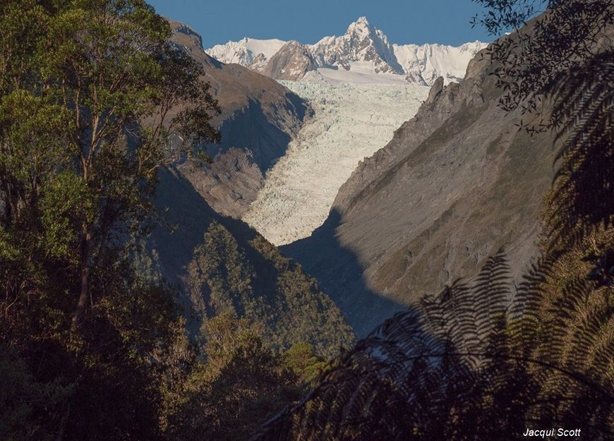 explore natural beauty of Fox Glacier