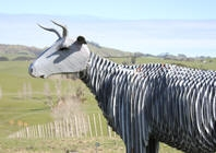 Wooden Cattle statue overlooks Northland farmland in Wellsford image