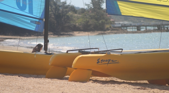 Image of Kayaks and sail boats for hire on the beach in Paihia one of many Paihia activities