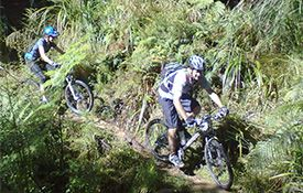 Whangamata Ridges Mountain Bike Park