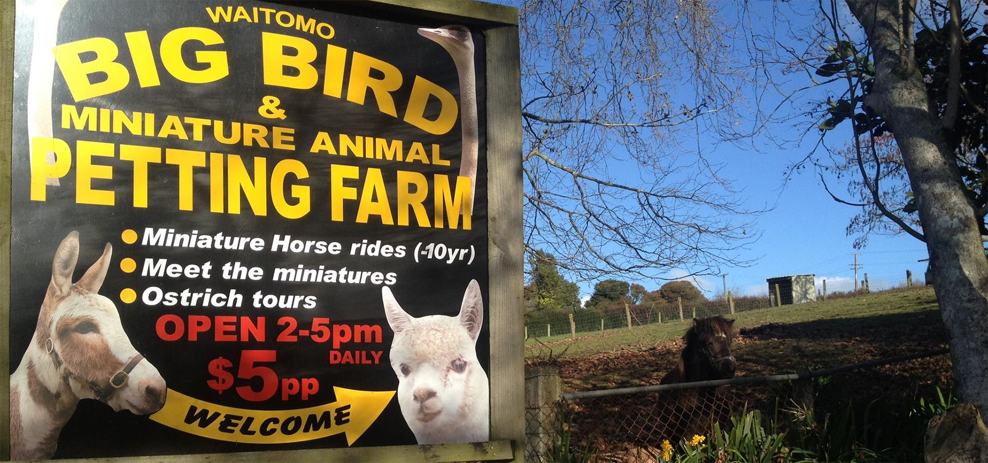 Waitomo Big Bird Bed and Breakfast and Petting Farm
