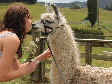 kiss a llama