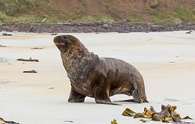 enjoy coastal scenery and wildlife