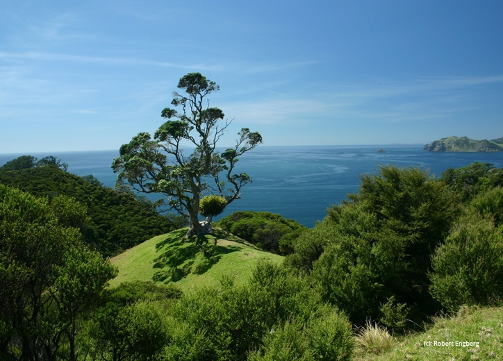 handy location of our Coromandel lodge