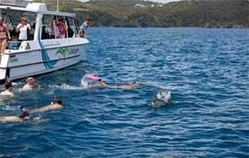 Fuller's Greatsights - Dolphin Eco Experience