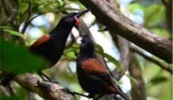 Kapiti Island birds