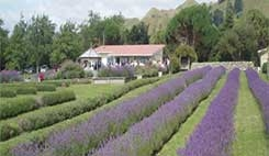 Lavender Creek Farm