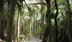 Nikau Reserve Bushwalk