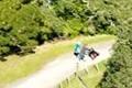 Tauranga walks