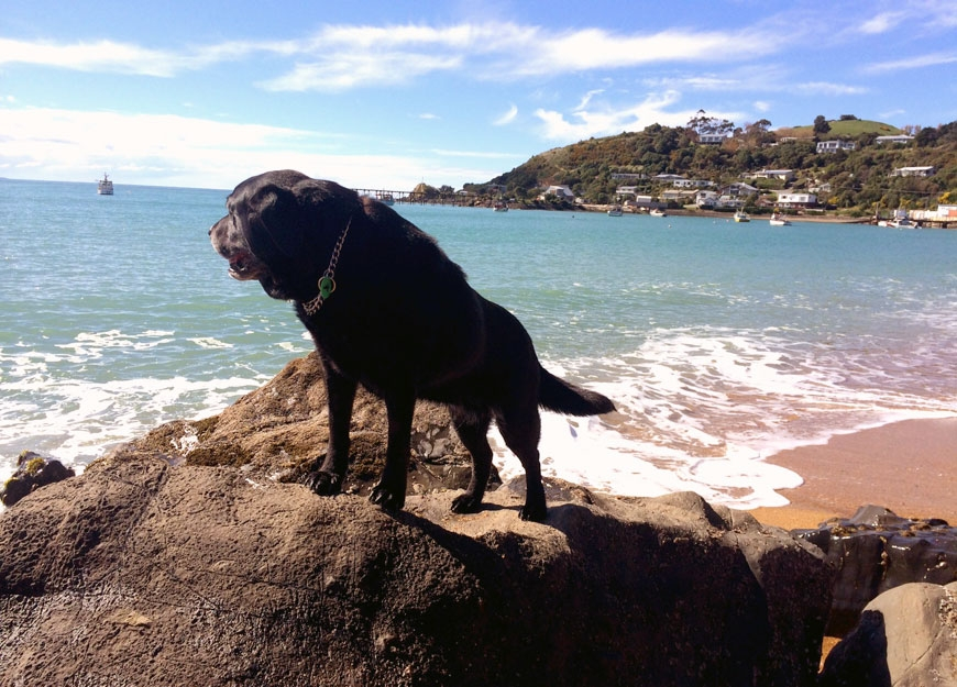 Moeraki Boulders beach activities