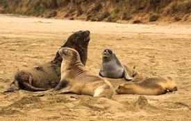 enjoy wildlife during your South Island tour