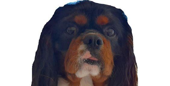 1-bedroom pet dog