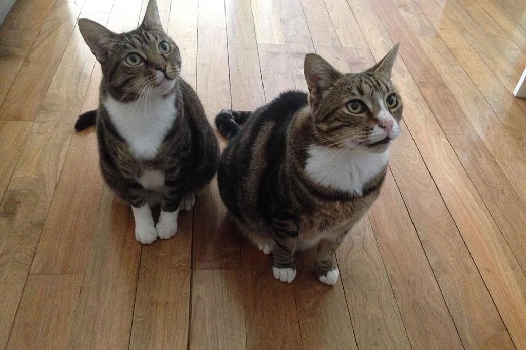 Tigger and Tomcat